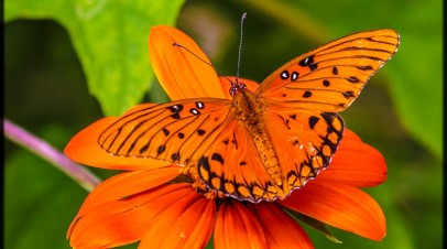 Tree Hill Butterfly Festival